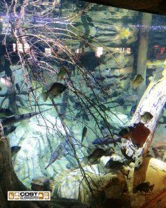 Aquarium Gallery 10a