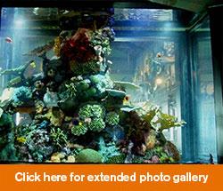 aquarium-gallery