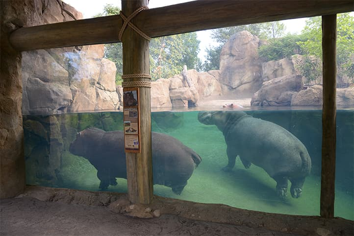 zoo exhibit fabrication