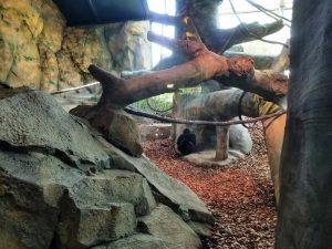 Cincinnati Gorilla World