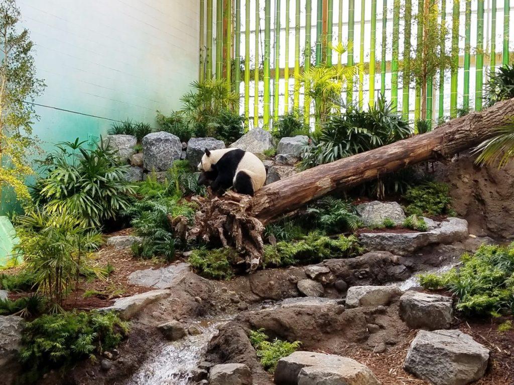 Calgary Zoo Panda Passage 3