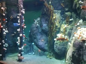 Pacific Seas Aquarium underwater scene 2