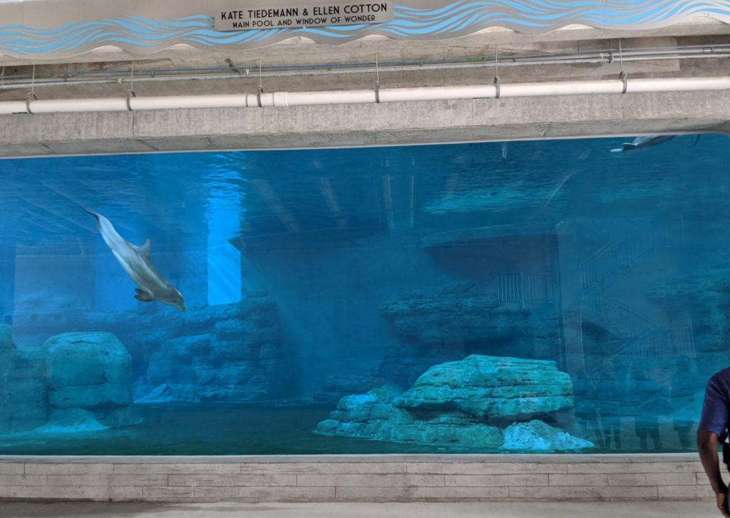Aquarium exhibit